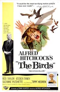 The Birds movie